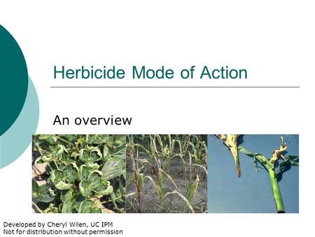 Herbicide Mode of Action An overview Developed by Cheryl Wilen, UC IPM Not for distribution without permission.