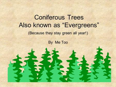 "Coniferous Trees Also known as ""Evergreens"" (Because they stay green all year!) By Me Too."