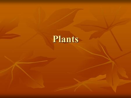 Plants. Objective Students will be able to Students will be able to Describe the characteristics of plants Describe the characteristics of plants.