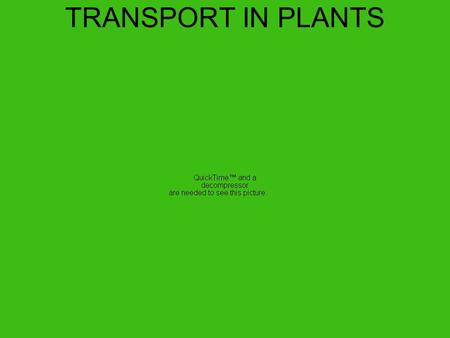 TRANSPORT IN PLANTS 2 types of transport tissue: XYLEM & PHLOEM.