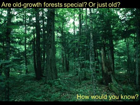 Are old-growth forests special? Or just old? How would you know?