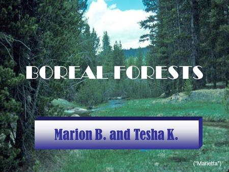 "BOREAL FORESTS Marion B. and Tesha K. (""Marietta"")"