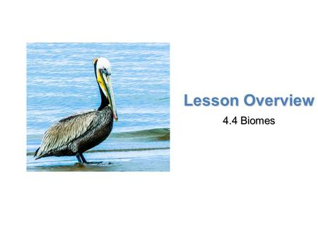 Lesson Overview 4.4 Biomes.