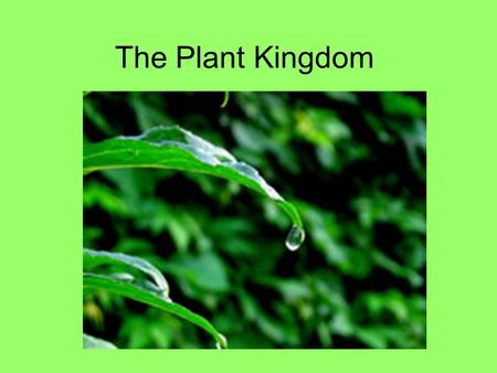 The Plant Kingdom.