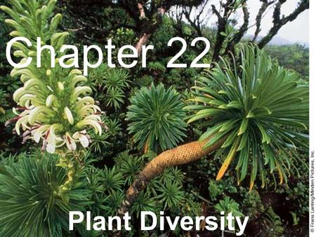 1 Chapter 22 Plant Diversity. 2 22–1 Introduction to Plants.