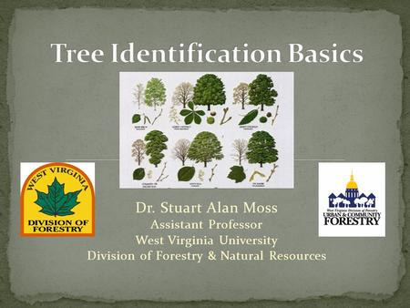 Dr. Stuart Alan Moss Assistant Professor West Virginia University Division of Forestry & Natural Resources.