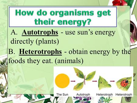 How do organisms get their energy?
