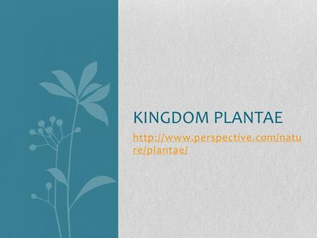 re/plantae/ KINGDOM PLANTAE.