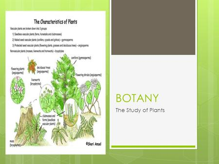 BOTANY The Study of Plants. Part 1: Classifying Plants.