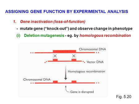 ASSIGNING GENE FUNCTION BY EXPERIMENTAL ANALYSIS