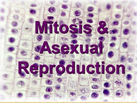 Mitosis & Asexual Reproduction