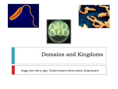 Domains and Kingdoms Images, from left to right: Cholera bacteria, Volvox colony, Strep bacteria.