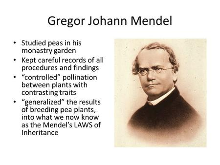 "Gregor Johann Mendel Studied peas in his monastry garden Kept careful records of all procedures and findings ""controlled"" pollination between plants with."