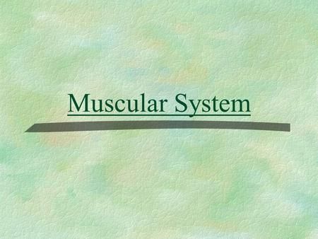 Muscular System. The Muscular System Muscles are responsible for all types of body movement Three basic muscle types are found in the body Skeletal muscle.