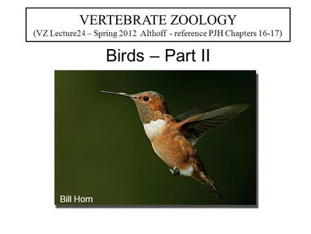 VERTEBRATE ZOOLOGY (VZ Lecture24 – Spring 2012 Althoff - reference PJH Chapters 16-17) Birds – Part II Bill Horn.