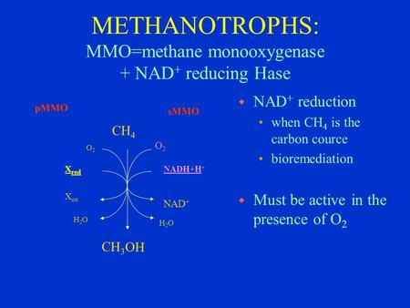 METHANOTROPHS: MMO=methane monooxygenase + NAD + reducing Hase CH 4 NADH+H + O2O2 H2OH2O NAD + O2O2 H2OH2O X ox X red sMMO pMMO CH 3 OH w NAD + reduction.