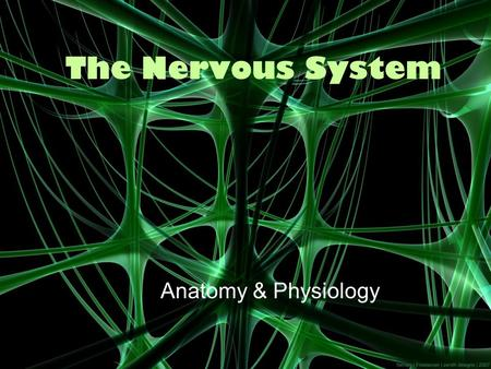 The Nervous <strong>System</strong> <strong>Anatomy</strong> & <strong>Physiology</strong> The Basics The nervous <strong>system</strong> is your bodys decision <strong>and</strong> communication center. The central nervous <strong>system</strong> (CNS)