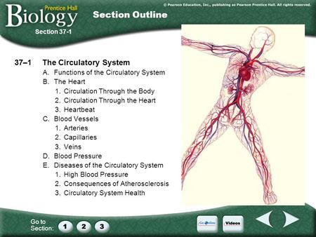 Go to Section: 37–1The Circulatory System A.Functions of the Circulatory System B.The Heart 1.Circulation Through the Body 2.Circulation Through the Heart.