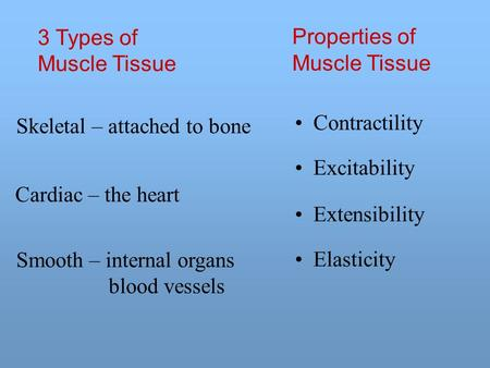 3 Types of Muscle Tissue Properties of Muscle Tissue Contractility