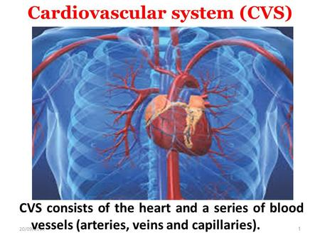 20/09/20151 Cardiovascular system (CVS) CVS consists of the heart and a series of blood vessels (arteries, veins and capillaries).