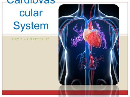 DAY 1 – CHAPTER 15 Cardiovas cular System. Overview Vascular System blood circulates inside closed transport systems.