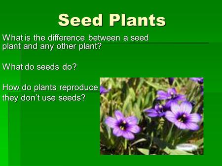 Seed Plants What is the difference between a seed plant and any other plant? What do seeds do? How do plants reproduce if they don't use seeds?