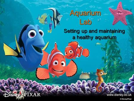 Aquarium Lab Setting up and maintaining a healthy aquarium.