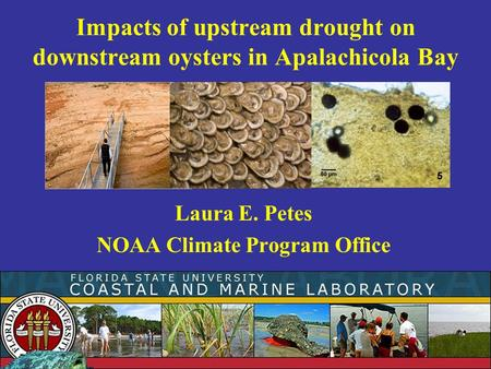 Impacts of upstream drought on downstream oysters in Apalachicola Bay Laura E. Petes NOAA Climate Program Office.