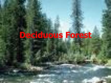 Deciduous Forest. Where Can I Find The Deciduous Forest! It can be found throughout the globe. Some are found in the eastern half of North America, middle.