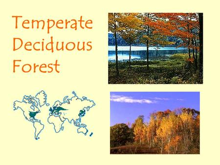 Temperate Deciduous Forest. Temperate Deciduous Forest Location and Climate The mid-latitude deciduous forest biome is located between the polar regions.
