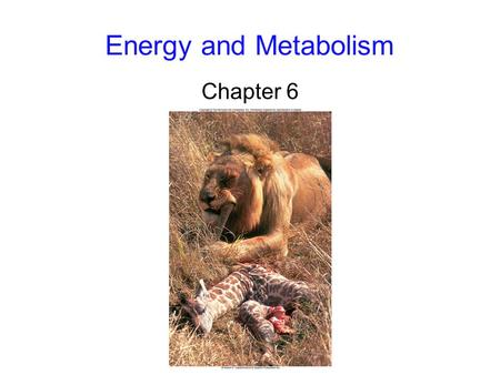 Energy and Metabolism Chapter 6. 2 Flow of Energy Energy: the capacity to do work -kinetic energy: the energy of motion -potential energy: stored energy.