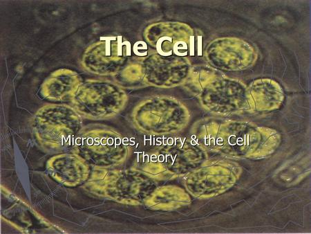 The Cell Microscopes, History & the Cell Theory. The Microscope ► Originally created for trade purposes ► Merchants needed a way of examining types of.