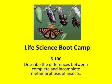 Life Science Boot Camp 5.10C Describe the differences between complete and incomplete metamorphosis of insects.