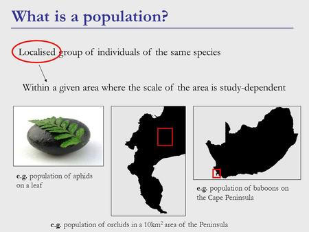 What is a population? Within a given area where the scale of the area is study-dependent Localised group of individuals of the same species e.g. population.