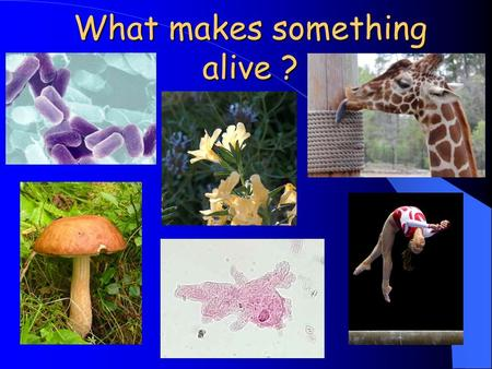 What makes something alive ?. What are living things? There are certain criteria that determine if something is living. Yes, ALL 9 criteria must be met.
