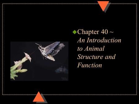 U Chapter 40 ~ An Introduction to Animal Structure and Function.