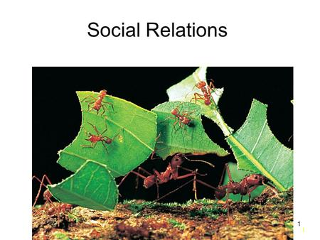 1 1 Social Relations. 2 2 Introduction Behavioral Ecology: Study of social relations. –Interactions control by behavior Sociobiology: –Study of social.