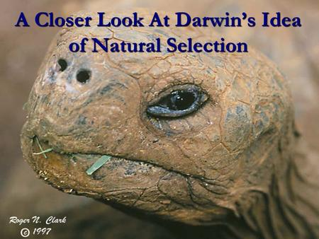 A Closer Look At Darwin's Idea of Natural Selection