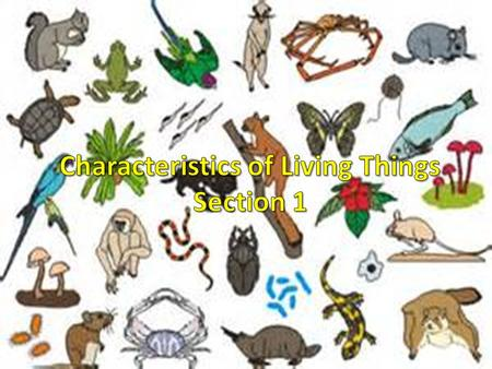Characteristics of Living Things Section 1