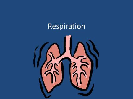 Respiration. – The process by which chemical bond energy in nutrients is used to synthesize ATP Respiration allows for the energy stored in food to be.
