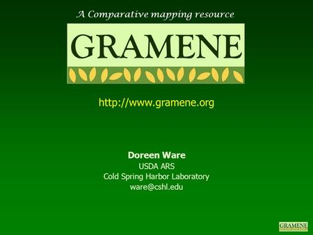 A Comparative mapping resource GRAMENE  Doreen Ware USDA ARS Cold Spring Harbor Laboratory