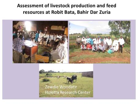 Assessment of livestock production and feed resources at Robit Bata, Bahir Dar Zuria Zewdie Wondatir Holetta Research Center.