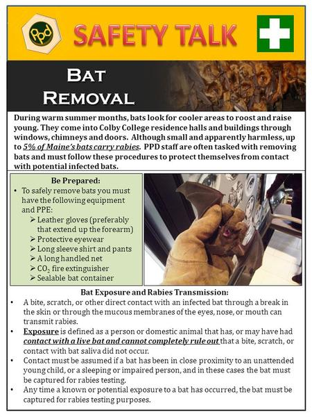 During warm summer months, bats look for cooler areas to roost and raise young. They come into Colby College residence halls and buildings through windows,
