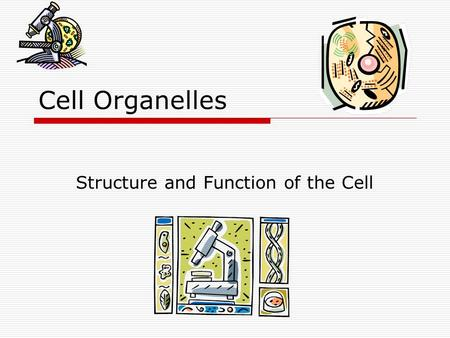 Cell Organelles Structure and Function of the Cell.