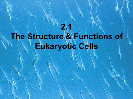 2.1 The Structure & Functions of Eukaryotic Cells.