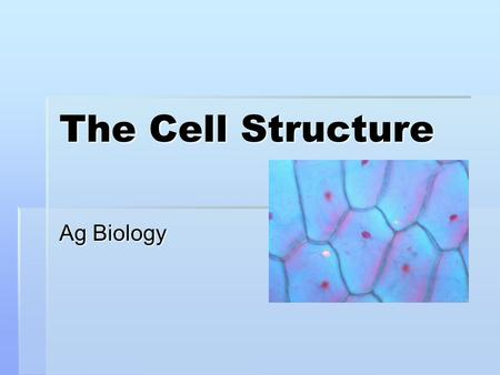 The Cell Structure Ag Biology. Cell Overview  CELLS-The common thing that makes up every living thing  Anton van Leeuwenhoek was the first person to.