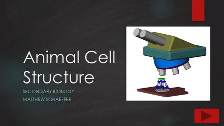 Animal Cell Structure SECONDARY BIOLOGY MATTHEW SCHAEFFER.