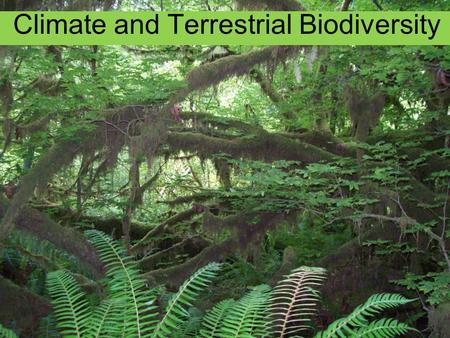 Climate and Terrestrial Biodiversity. Hoh Rainforest (140 – 170 inches rainfall per year)