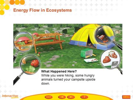 Energy Flow in Ecosystems What Happened Here? While you were hiking, some hungry animals turned your campsite upside down.