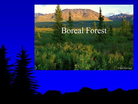 Boreal Forest. What is the Boreal Forest? Boreal means Northern. The Boreal forest is the forest in the north; almost like a continuous belt around the.